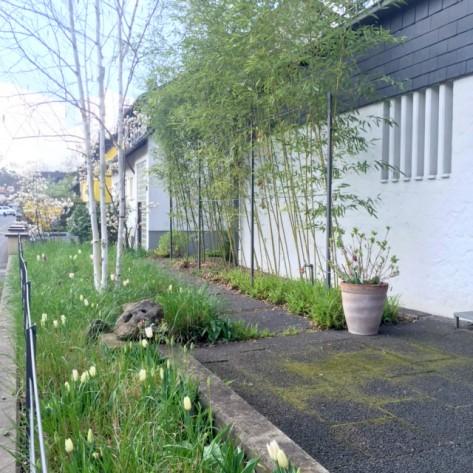 Tulpen und Reitgtras