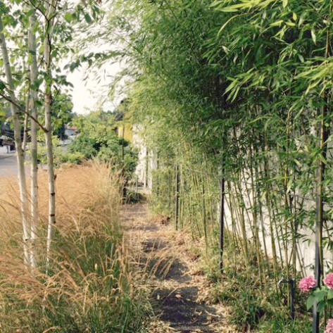 Bambus- Luzula Calamagrostis u Himmalayabirke