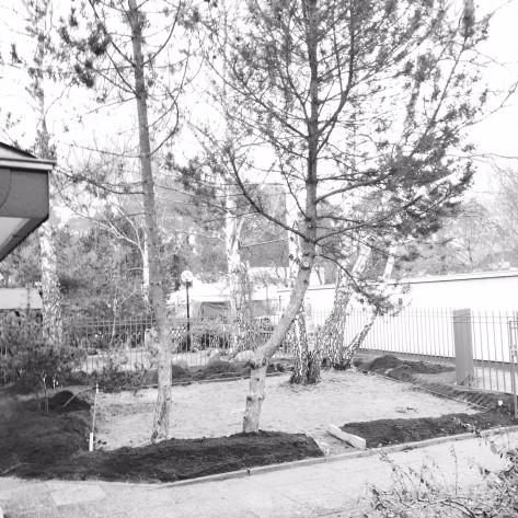 Vorgarten: extensiver Rasen mit üppiger Rahmenpflanzung